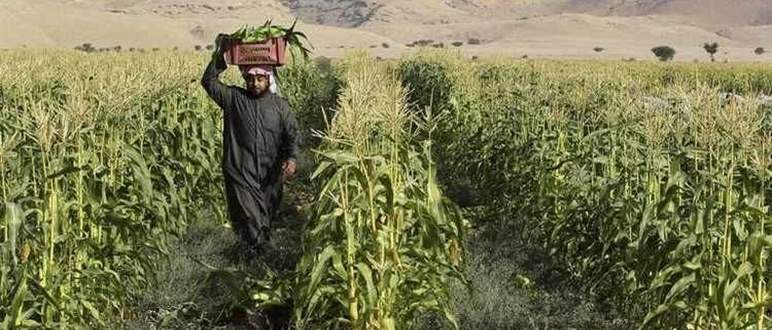 Is the agro-food sector on the rise in the Middle East?