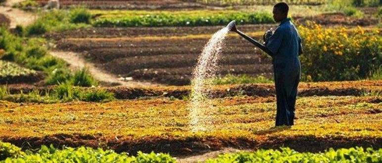 Issues and Challenges facing Agro-Food in Africa Today